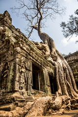Tomb Raider Tree | Ta Prohm Temple