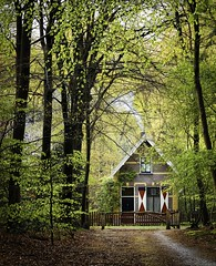 Little house in the woods (ParadoX_Design) Tags: wood red white house holland tree wet netherlands dutch rain architecture forest spring path cottage lane shutters typical hilversum hous coversbos