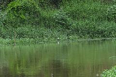 FIUME NELLA FORESTA    ---   EXPLORE (Ezio Donati) Tags: africa flowers trees verde green nature water alberi forest natura fiori acqua camerun forestapluviale rain nikond700 areamafou