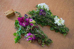 (Psinthos.Net) Tags: flowers light spring blossoms april oregano sunnyday  herbals  psinthos
