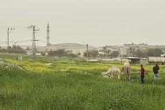 Lakiya, Naqab (duoyen) Tags: israel negev bedouin naqab lakiya