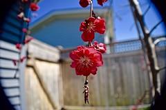 Flower (karlynevarita) Tags: flower spring outdoor tress
