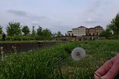1604_#ReggiadiVenaria_3353-01 (vb.2015y) Tags: alberi erba cielo mano prato canale soffione fujix30