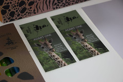 Zoo ticket branding (melicia foster) Tags: design graphic ticket business branding