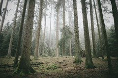Back Where I Belong (desomnis) Tags: wood trees mist tree nature misty fog forest woodland landscape austria landscapes woods natural natur foggy mystical landschaft mystic upperaustria mhlviertel landscapephotography bhmerwald bohemianforest sigma35mm vsco desomnis