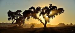 Sunshine & dust (Jos M. F. Almeida) Tags: portugal rally tt 18 alentejo fronteira 2015 18edio 24horasdottfronteira