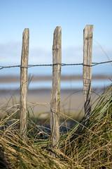 Three (Wouter de Bruijn) Tags: wood beach grass fence landscape coast post depthoffield fujifilm xt1 fujinonxf35mmf14r