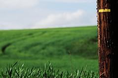 Graphisme rural (YadelAir) Tags: rural champs culture vert paysage mons gard graphisme