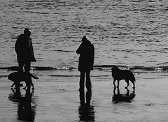 Down by The Shore with Dogs (Evergreen2005) Tags: sea dog silhouette walkers