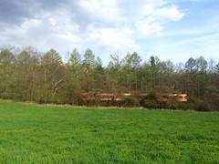 (tenugui) Tags: train railway grassland yamanashi     hokutocity