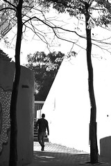 Daily (mara.arantes) Tags: blackandwhite tree geometric monochrome architecture digital nikon