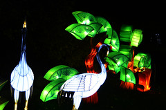 Bird Lanterns (pokoroto) Tags: autumn canada calgary bird october alberta lanterns 10 2015     kannazuki   themonthwhentherearenogods 27
