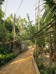 IMG_6912.jpg (Kuruman) Tags: street sylhet bangladesh srimangal