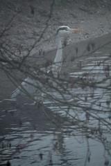 the blurry branch (Etching Stone) Tags: heron birds fog river grey blurry branch twig stealth mode birdwatcher reiher