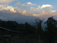 Annapurnas in evening light from Tadopani (anjetika) Tags: one day south annapurna machapuchare