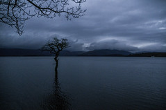 Loch Lomond (jamie reilly) Tags: tree water scotland flood highland loch highwater lochlomond balmaha rowardennan milarrochy