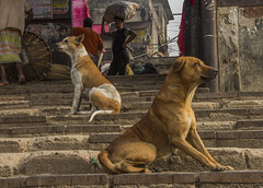 Guardian Of The City (dewan imtiaz rahman) Tags: street city people urban dog animal streetphotography human dhaka bangladesh bazar