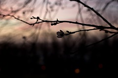 Sunrise (TerezaN Photography) Tags: sunrise bristol nikon cabottower d810