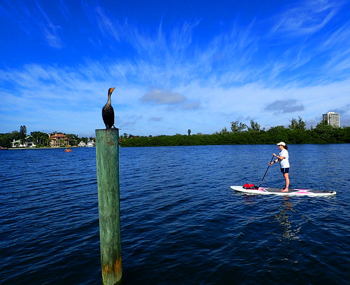 1_8_16 paddleboard tour Sarasota Florida 01