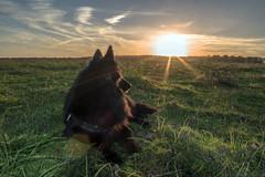 Probando Objetivo (abel.maestro) Tags: sunset espaa dog animals atardecer sevilla andaluca belga perro animales nut maestro abel pastor 34 nuttoma