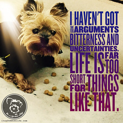 Just be sweet - it works most times (itsayorkielife) Tags: yorkie quote yorkshireterrier yorkiememe