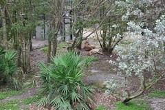 SAM_3471 (Michael Supinski) Tags: florida alligator baldeagle deer turaco jaguar bobcat lorikeets sandhill cassowary warthog hyacinthmacaw bluemacaw brevardzoo cockiel