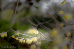 (everlasting holiday) Tags: flower tree nature