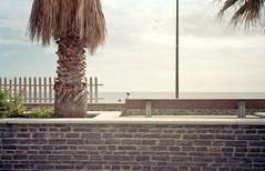 Layers (ZoSo74) Tags: sea italy muro film beach wall palms gold italia mare colours colore kodak liguria rangefinder olympus xa2 100 xa expired negativo palme spiaggia oly c41 pellicola arenzano scaduta ga100
