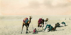 Cairo - Natives traversing the Dessert (findingdorrie) Tags: travel sahara vintage desert postcard egypt archive collection cairo photograph colorized 1910s orientalism imperialism camels tinted sic aesthetic ziegler katheryn tintedphotograph katherynzieglercollection