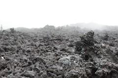 DSC_5653 (Kent MacElwee) Tags: latinamerica fog volcano highlands guatemala antigua centralamerica pacaya lavarocks activevolcano volcanpacaya