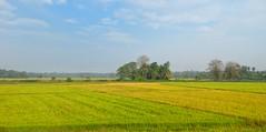 Paddy Fields (Ashen Monnankulama) Tags: sky landscape paddy srilanka lush agriculture paddyfields lenovo lenovok80m