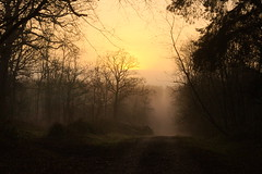 (vieubab) Tags: nature jaune lumire couleurs or branches hiver arbres paysage extrieur sentier chemin fort contrejour goldenhour bois brume calme feuille escapade aube feuillage branchage luminosit saveearth levdujour lumirediffuse sonyflickraward