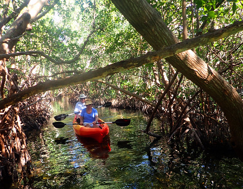 2_22_16 Kayak Tour Sarasota FL 03