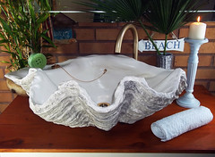 Grey Giant Clam Shell SINK 13 (LittleGems AR) Tags: ocean sea sculpture sun beach home statue giant bathroom shower aquarium soap sand bath sink natural contemporary unique decorative shell craft style toilet towel clam basin special shampoo taps wash ornament gift seashell pearl nautical reef decor spa luxury opulent fossils oneoff clamshell mollusks cloakroom bespoke tridacna sculpt crafted gigas facetowel