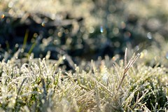 Early in the morning (myu-myu) Tags: morning winter nature japan nikon frost  d800   afsvrmicronikkor105mmf28g