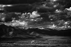 Far east (Benjamin Ramon) Tags: travel sky horse cloud naturaleza india white mountain snow black blanco ice nature monochrome rock canon landscape caballo cheval mono asia noir altitude nieve negro paisaje cielo zanskar kashmir himalaya montaa nuage paysage range blanc hielo treck ladakh jammu inde nuve 70d inde2015