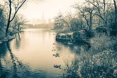 Central Park, NYC (nianci pan) Tags: park nyc newyorkcity winter urban blackandwhite bw mist lake snow plant newyork tree bird nature water monochrome rain misty fog river landscape pond centralpark manhattan sony foggy tranquility rainy serenity serene pan tranquil   sonyalphadslr  nianci sonyphotographing