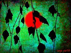 leaves (Sonja Parfitt) Tags: red sun green texture manipulated canvas