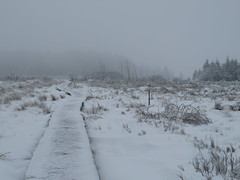 IMG_8572 (Bike and hiker) Tags: winter mist hiver sneeuw neige venn hoge hautes fagnes venen hohes botrange neur bayehon low