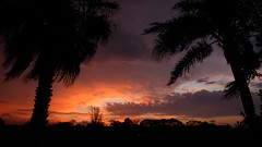 Sunrise before the storm. (Jim Mullhaupt) Tags: pictures camera morning pink blue winter red wallpaper sky orange sun storm color tree rain weather silhouette yellow clouds landscape photography dawn photo nikon flickr wind florida snapshot picture palm exotic p900 tropical coolpix thunder bradenton sunup nikoncoolpixp900 coolpixp900 nikonp900 jimmullhaupt stsunrise