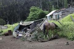 San Juan Bautista (blueheronco) Tags: chile horse cat sanjuanbautista woodboat robinsoncrusoeisland juanfernandezislands archipelagojuanfernandez