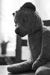 Halt dich an mir fest ... (pedschwork.fotodesign) Tags: bear friend teddy spielzeug freund comforter br trster