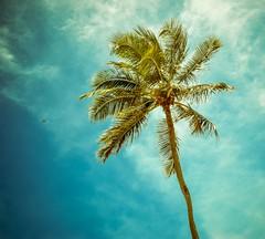Férias (Samu El Ribeiro) Tags: sol brasil natural natureza fortaleza norte nordeste calor nordestino sertao culturanordestina ensolarado agreste ceata nordestinos cearense praiasdonordeste nordestegram