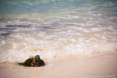 2016-04-09_IMG_3621 (talentfrei79) Tags: espaa primavera canon mar spain mediterraneo abril espana april formentera islas spanien mediterrneo baleares frhling balearen balears 2016 mittelmeer illes 50d pityusen