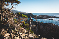 Point-Lobos-25 (hotcommodity) Tags: california sunset monterey hiking highway1 pacificocean spanishmoss coastline montereycypress westcoast bigsurcoast cypressgrovetrail pointlobosstatenaturalreserve