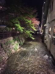 Japan April 5 - 20 2016 (Tjeerd) Tags: trees water japan creek kyoto stream cherryblossom gill kyotobynight