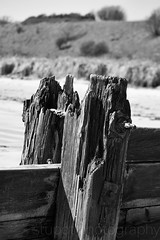 Black and White Groyne on Alnmouth Beach (Stuart Tarn) Tags: england spring unitedkingdom northumberland alnmouth gb northeast