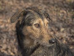_DSC0192 (Jacob_O) Tags: dogs candy tanuki d750 vr honden f3545 2485