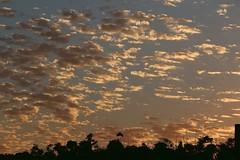 Nuvens ao amanhecer (Sonia Carzino) Tags: clouds nuvens nwn
