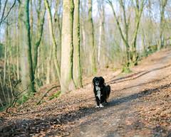 huh? (nils_karlson) Tags: dog chien colour 120 mamiya film mediumformat germany landscape kodak ishootfilm 120film perro hund portra rz67 colournegative kodakmoment portra800 c41 kodakportra800 110mm mamiyarz67 carlzeissbiometar80mm ukfilmlab ukfl rudigerthelandscapedog rdigerthelandscapedog